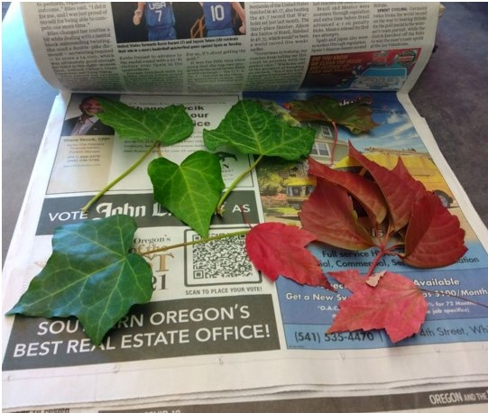Spread your leaves between sheets of newspaper